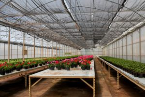 Greenhouse products