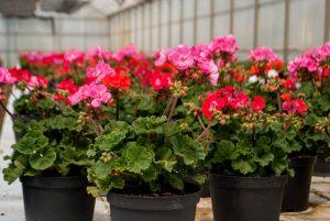 Dianova's plant nursery