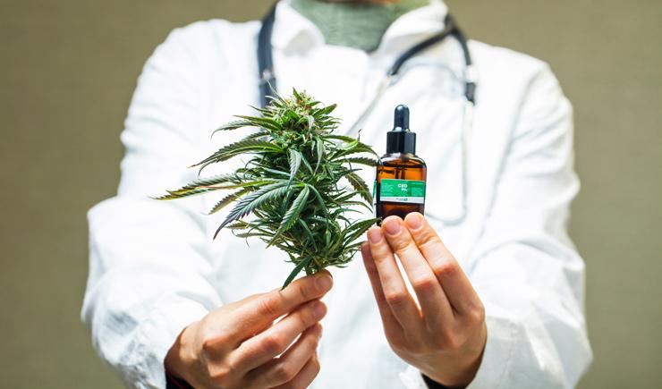 Study on cannabis