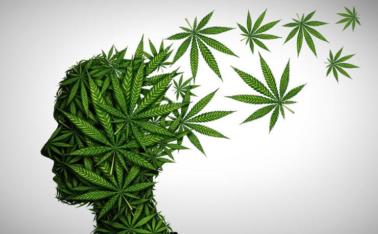 Cannabis et risques psychotiques
